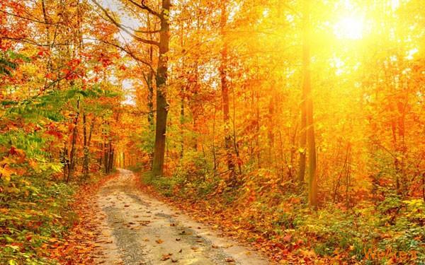 تصاویر پاییز, عکس پاییز (15)