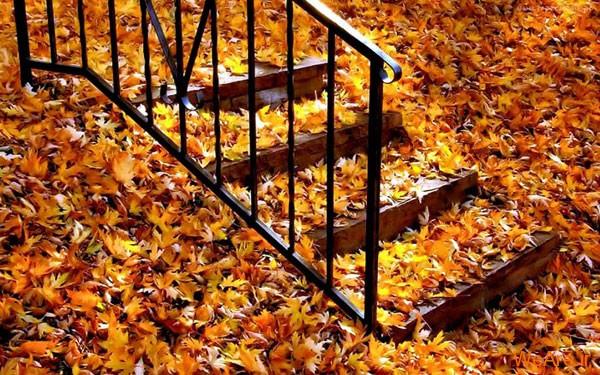 تصاویر پاییز, عکس پاییز (14)