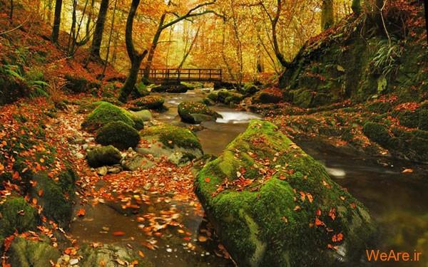 تصاویر پاییز, عکس پاییز (11)