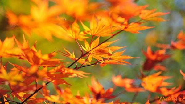 پادشاه فصل ها پاییز / مجموعه تصاویر روح نواز از پاییز
