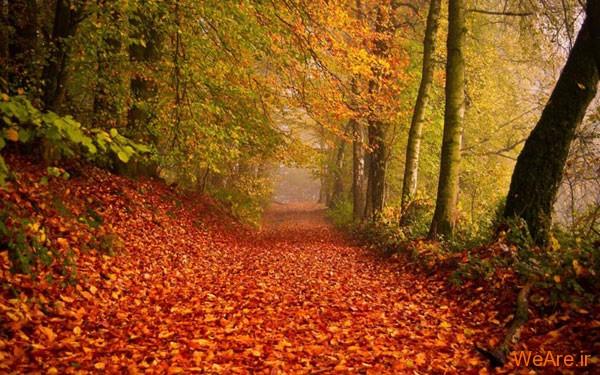 تصاویر پاییز, عکس پاییز (7)