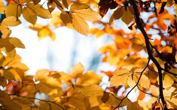 تصاویر پاییز, عکس پاییز (3)