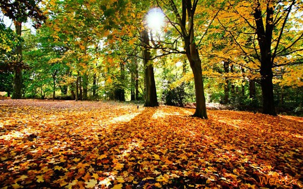 تصاویر پاییز, عکس پاییز (4)
