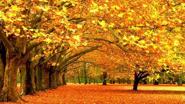 تصاویر پاییز, عکس پاییز (1)