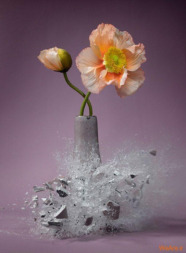 عکس  سرعت بالا از شکست گلدان (2)