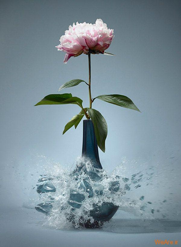 عکس  سرعت بالا از شکست گلدان (1)