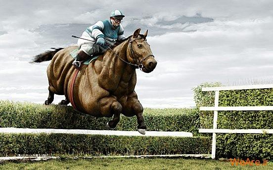 تصاویر خلاقانه، اسب چاق