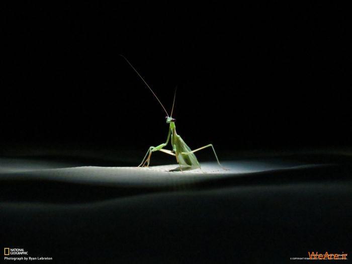عکس حیوانات، تصاویر نشنال جئوگرافیک (13)