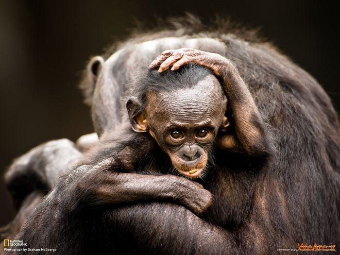 عکس حیوانات، تصاویر نشنال جئوگرافیک (18)