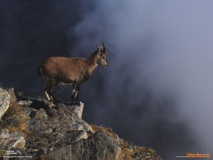 عکس حیوانات، تصاویر نشنال جئوگرافیک (29)