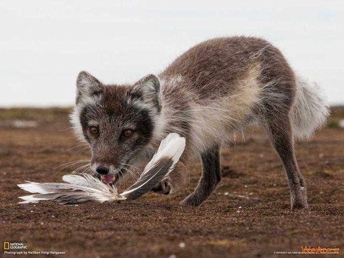 عکس حیوانات، تصاویر نشنال جئوگرافیک (36)
