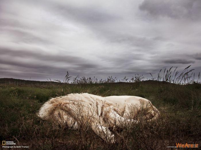 عکس حیوانات، تصاویر نشنال جئوگرافیک (45)