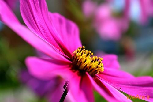 عکس گل های زیبا (10)