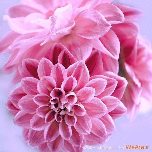 هدیه آفریدگار به آفریده / گل های زیبا