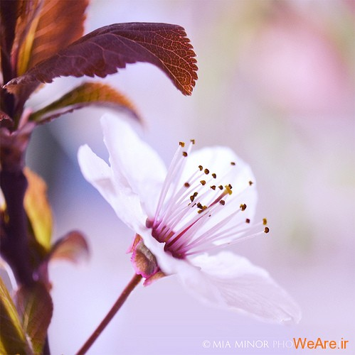 عکس گل های زیبا (3)