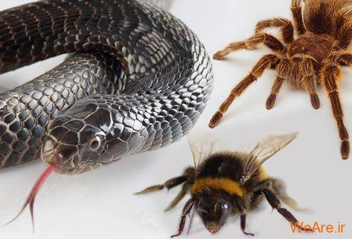 زوفوبیا: ترس از حیوانات