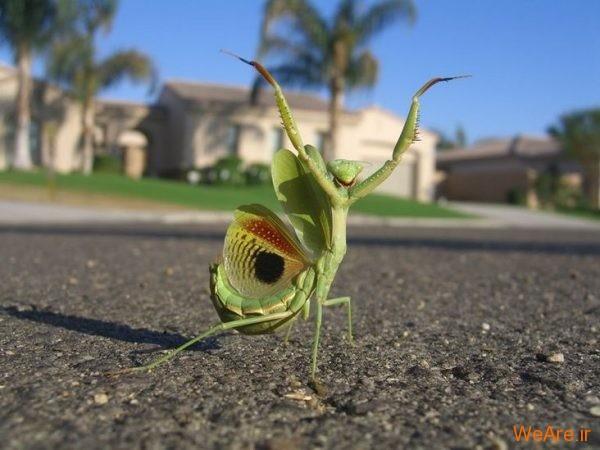 زیبایی و ترس در حیات وحش (1)
