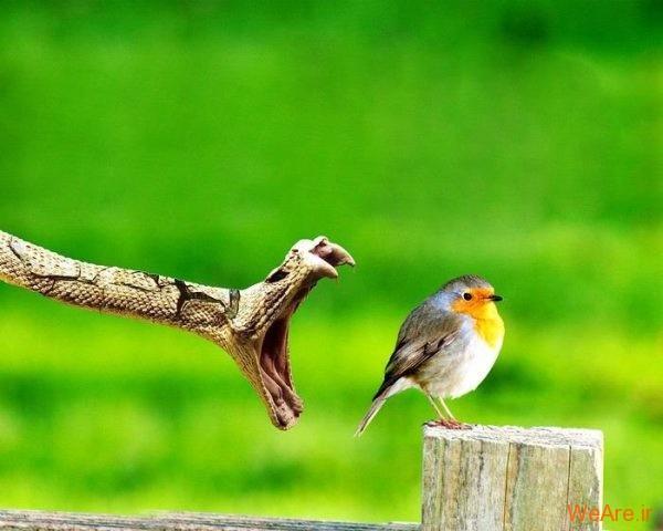 تقابل غایت زیبایی و نهایت ترس در حیات وحش