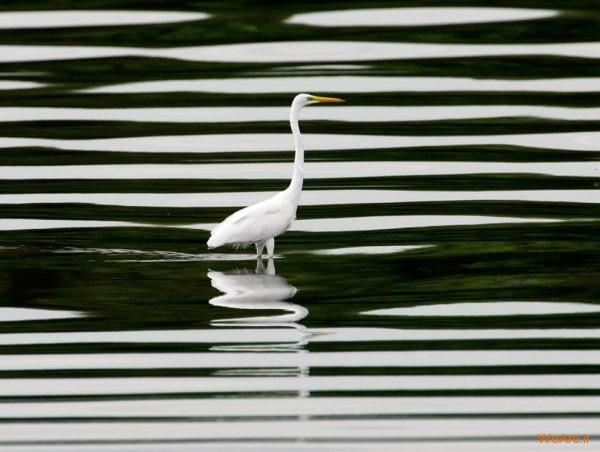 تصاویر برگزیده از طبیعت (2012) (12)