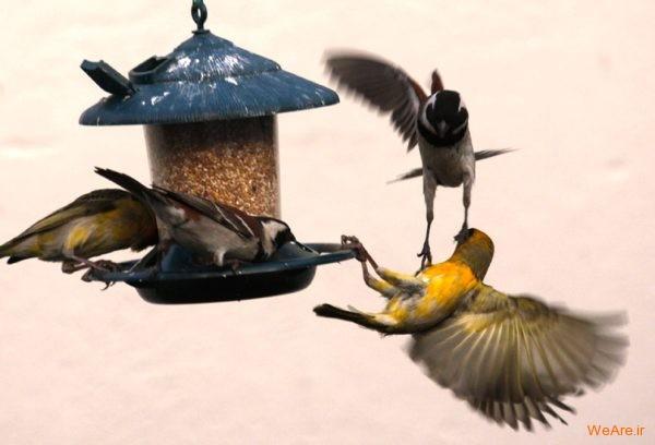 تصاویر برگزیده از طبیعت (2012) (30)