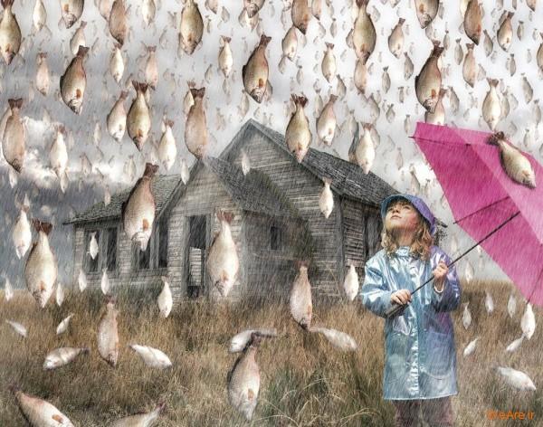 Rain-of-fish-weare.ir