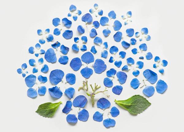 گل های پرپر (1)