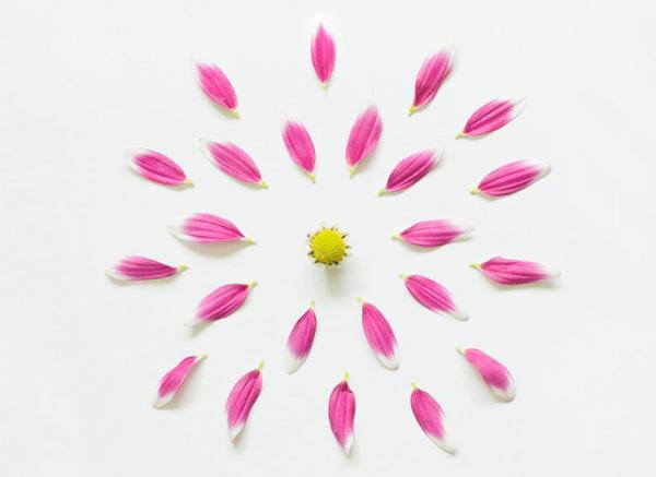 گل های پرپر (2)