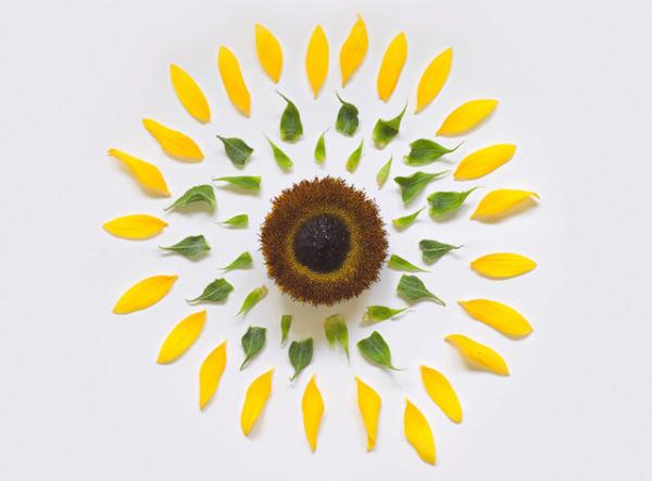 انفجار گل! تصاویر فوق هنری از گل های پرپر
