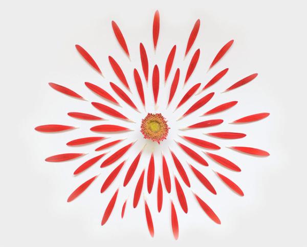 گل های پرپر (5)