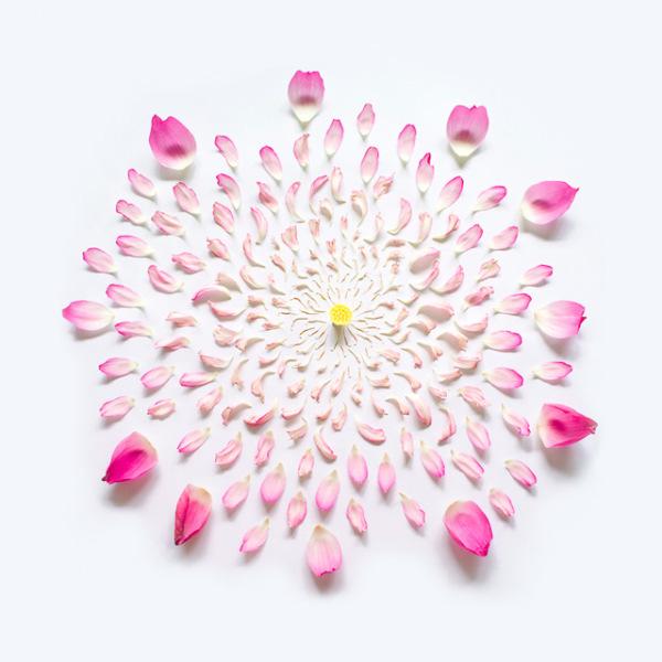 گل های پرپر (6)