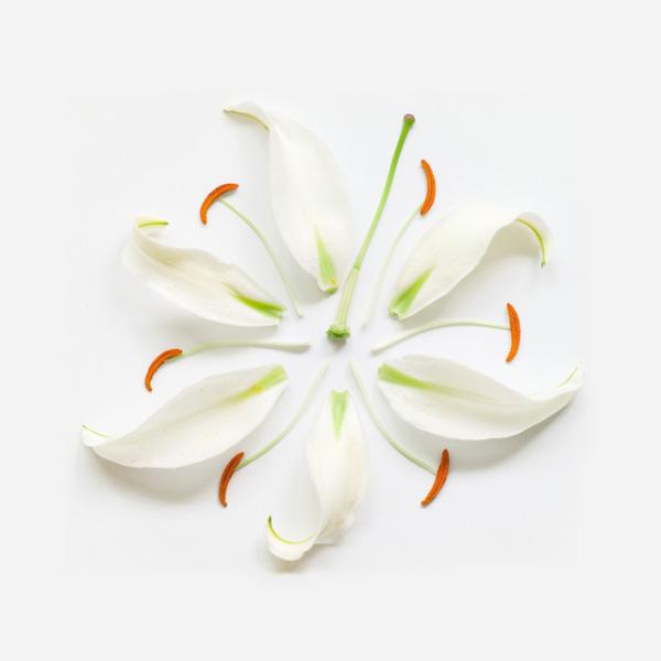 گل های پرپر (7)