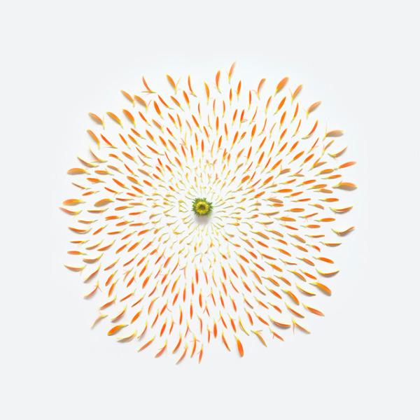 گل های پرپر (8)