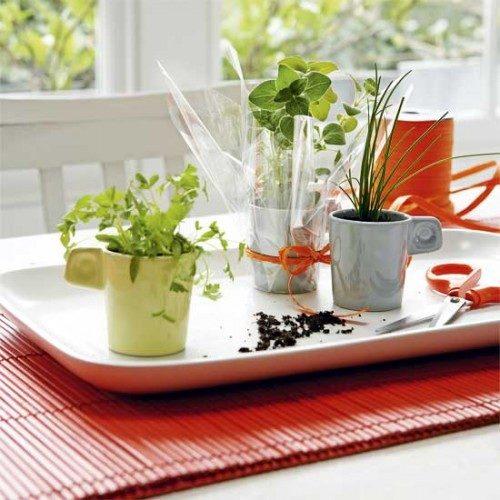 گیاهان دارویی (4)