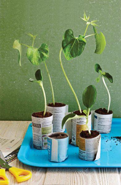 گیاهان دارویی (12)