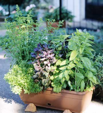 گیاهان دارویی (13)