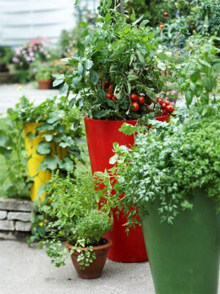 گیاهان دارویی (5)