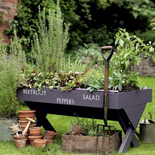 باغچه گیاهان دارویی در آشپزخانه