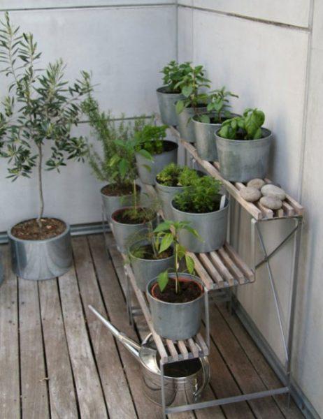 گیاهان دارویی (30)