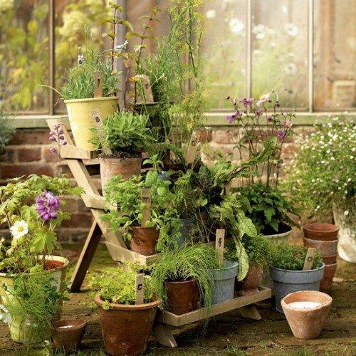 گیاهان دارویی (32)