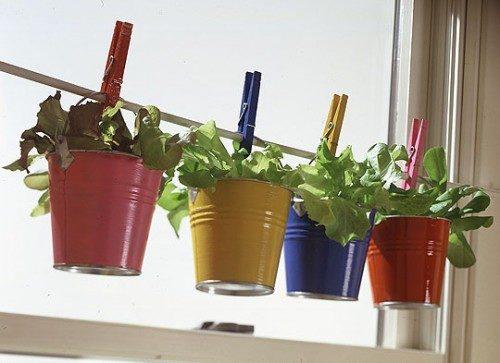 گیاهان دارویی (34)