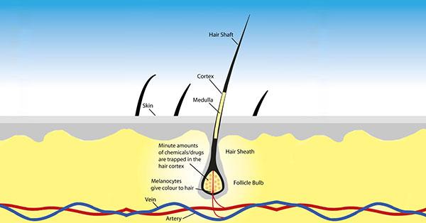 تشخیص اعتیاد از موی بدن تا ۳ ماه پس از مصرف
