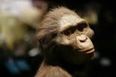 سیر تکامل بشر از ۵۵ میلیون سال پیش تا به امروز
