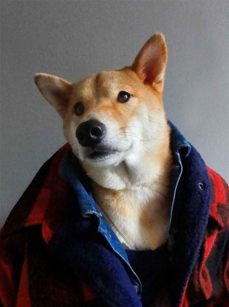 سگی با لباس مردانه (4)