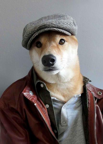 سگی با لباس مردانه (3)