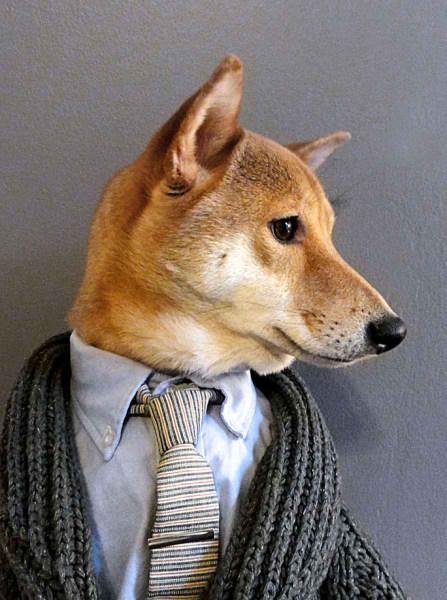 سگی با لباس مردانه (11)