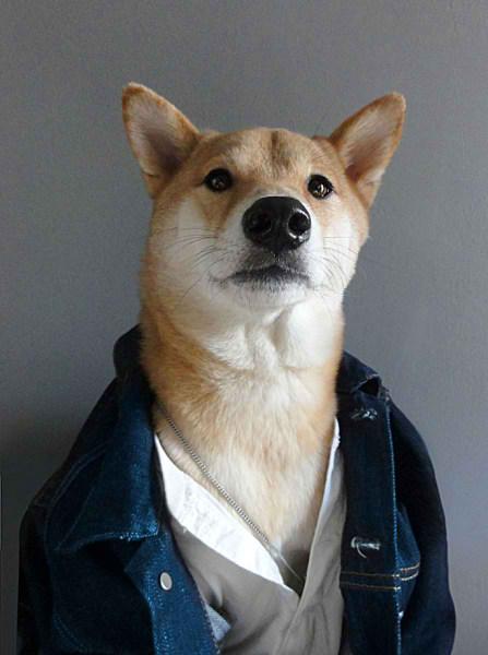 سگی با لباس مردانه (7)