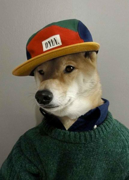 سگی با لباس مردانه (1)