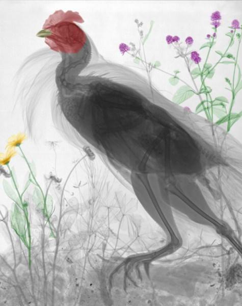 تصاویر فوق العاده از طبیعت با اشعه X  (4)