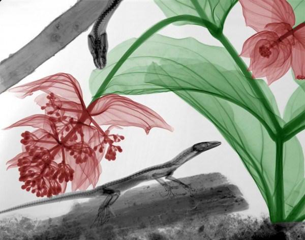 تصاویر فوق العاده از طبیعت با اشعه X  (10)