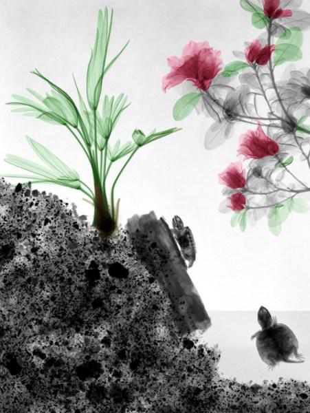 تصاویر فوق العاده از طبیعت با اشعه X  (9)